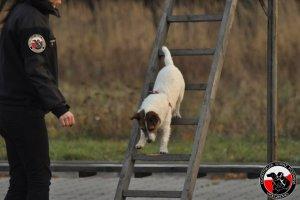 Egzamin psów ratowniczych - kolejne licencje w województwie!  9- 10.11.12 Sieradz