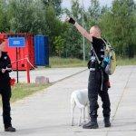 Egzaminy psów ratowniczych