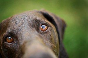 Naucz swojego psa aportować! Aport część III