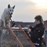 Psy ratownicze w Szczecinie - OSP Wołczkowo