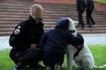 Nabór na przewodników psów ratowniczych