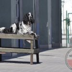 Egzaminy psów ratowniczych Gdańsk 2014 - kolejne 5 licencji dla OSP Wołczkowo