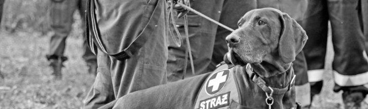 Certyfikowane psy ratownicze
