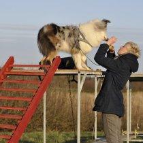 Przyzwyczajanie psa do wysokości
