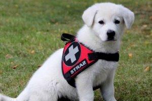 Nowy pies w SPR Wołczkowo
