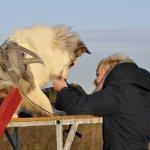 Uspokajanie psa na przeszkodzie