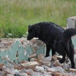 Psy ratownicze na gruzowisku