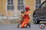 Egzamin na instruktora psów ratowniczych