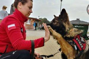 """""""Dzień psiaka i kociaka"""" w schronisku dla bezdomnych zwierząt w Dobrej."""