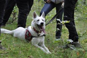 4 kolejne certyfikaty dla Wołczkowa! Egzaminy psów ratowniczych w Gdańsku 25.08.2013