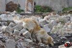 Zgrupowanie szkoleniowe dla przewodników psów Sekcji OSP Wołczkowo - praca na gruzowisku