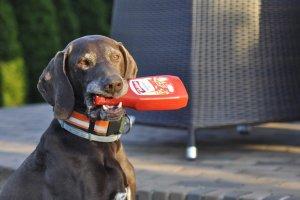 Naucz swojego psa aportować! Aport część I