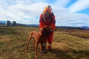 Egzaminy psów ratowniczych w Nowym Sączu