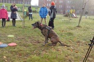Happening DOGadaj się z psem! Kołobrzeg 22.11.2014