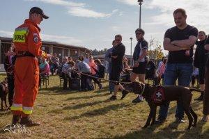 Dni otwarte schroniska dla psów w gminie Dobra