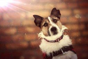 Agent emerytowany pies ratowniczy
