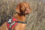 Pies meldunkowy i rolkowy - szkolenie i dopracowanie metody oznaczania