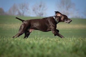 Nabór przewodników i psów