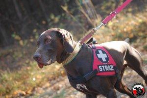 Egzamin przewodników i psów ratowniczych specjalności terenowej